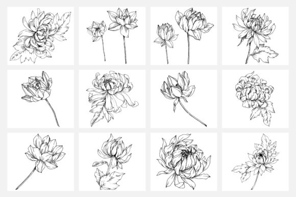 Print on Demand: Vector Illustration of Freesia Flower Graphic Illustrations By MyStocks - Image 6