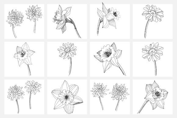 Print on Demand: Vector Illustration of Freesia Flower Graphic Illustrations By MyStocks - Image 8