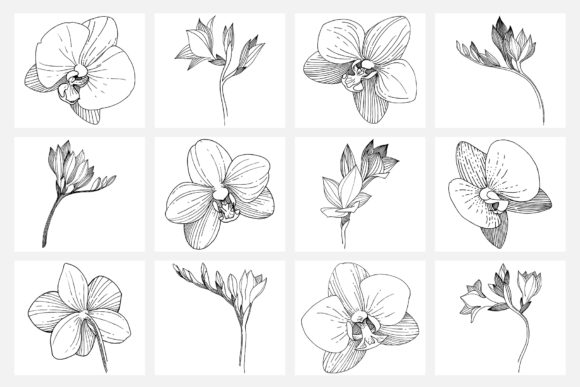 Print on Demand: Vector Illustration of Freesia Flower Graphic Illustrations By MyStocks - Image 9