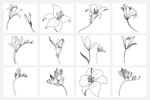 Print on Demand: Vector Illustration of Freesia Flower Graphic Illustrations By MyStocks - Image 10