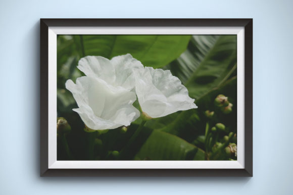 Flowers Photography of Botanical Garden Graphic Nature By Kerupukart Production