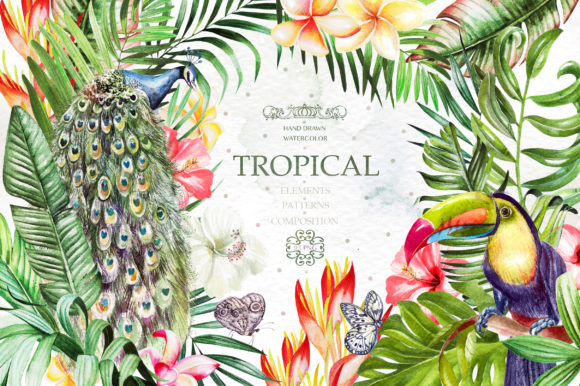 Hand Drawn Watercolor Tropic 4 Graphic Illustrations By Knopazyzy