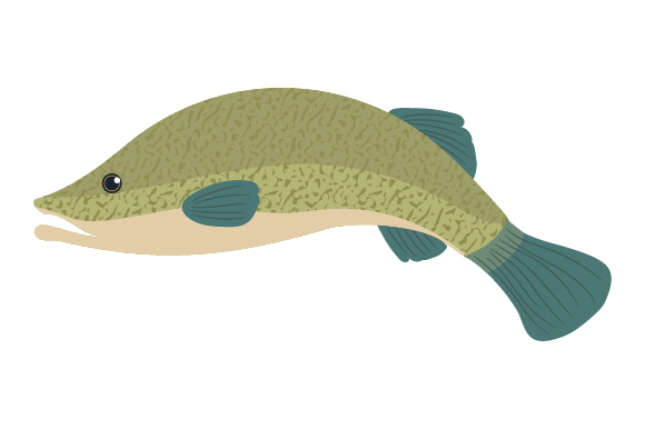 Download Free Murray Cod Svg Cut File By Creative Fabrica Crafts Creative for Cricut Explore, Silhouette and other cutting machines.