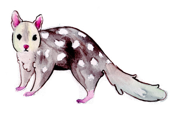 Quoll in Watercolor Style Australia Craft Cut File By Creative Fabrica Crafts - Image 1