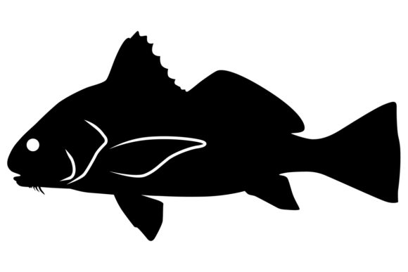 Download Free Black Drum Fish Silhouette Graphic By Idrawsilhouettes for Cricut Explore, Silhouette and other cutting machines.