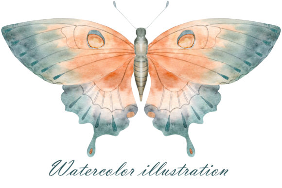 Watercolor Butterfly Graphic Crafts By dvdarina