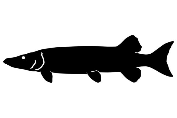 Download Free Muskellunge Muskie Silhouette Graphic By Idrawsilhouettes for Cricut Explore, Silhouette and other cutting machines.