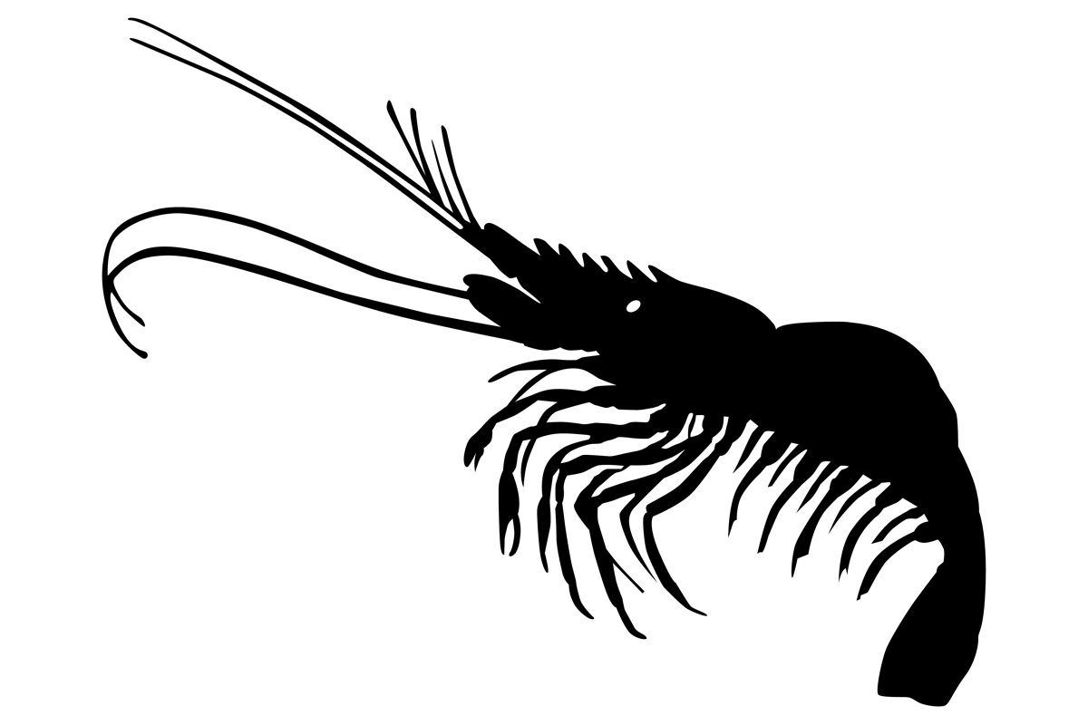 Download Free Shrimp Silhouette Graphic By Idrawsilhouettes Creative Fabrica for Cricut Explore, Silhouette and other cutting machines.