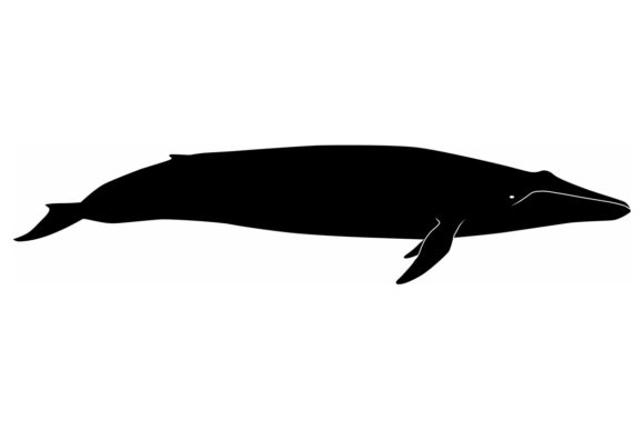 Download Free Blue Whale Silhouette Graphic By Idrawsilhouettes Creative Fabrica for Cricut Explore, Silhouette and other cutting machines.