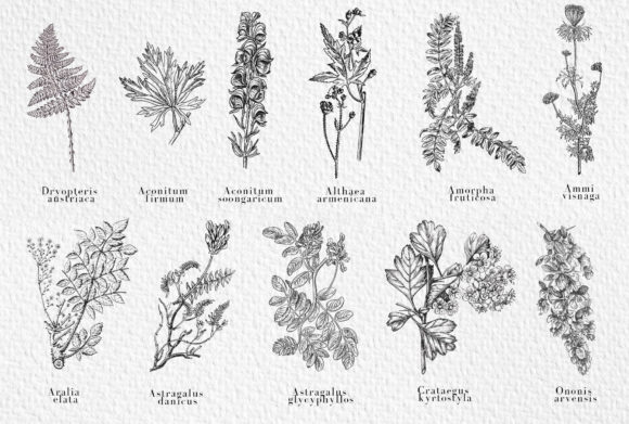 Download Free Garden Of Eden Vintage Botany Set Graphic By Kaleriiatv for Cricut Explore, Silhouette and other cutting machines.