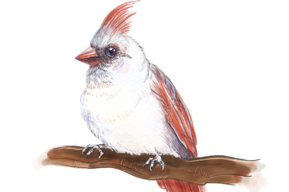 Print on Demand: Song of Bird Clipart Graphic Illustrations By info.neilhubert - Image 1