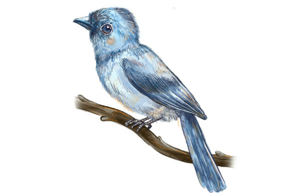 Print on Demand: Song of Bird Clipart Graphic Illustrations By info.neilhubert - Image 2