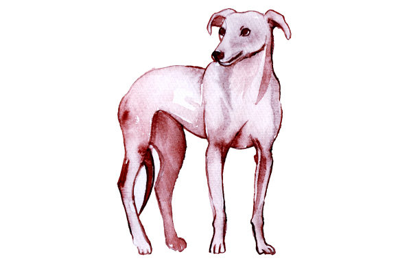 Greyhound Dogs Craft Cut File By Creative Fabrica Crafts - Image 1