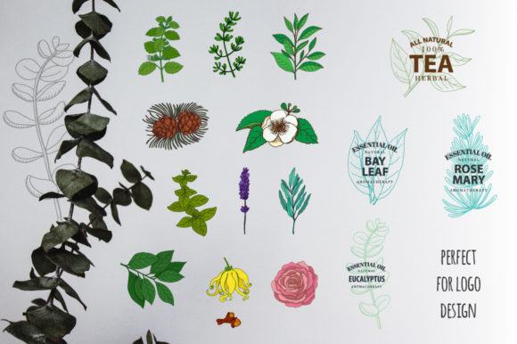 Download Free Essential Oils Components Graphic By Annamagenta Creative Fabrica for Cricut Explore, Silhouette and other cutting machines.