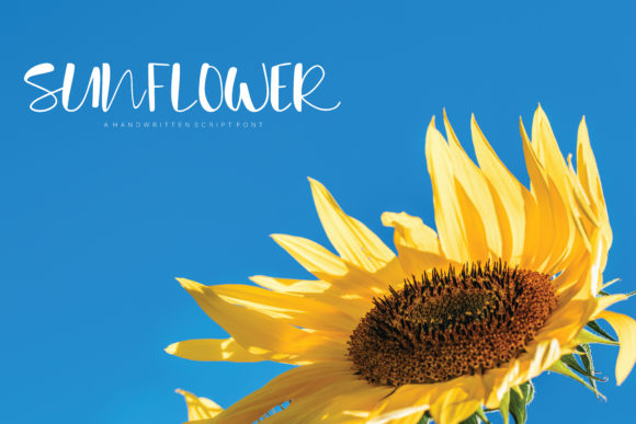 Print on Demand: Sunflower Script & Handwritten Font By Danika D. - Image 1
