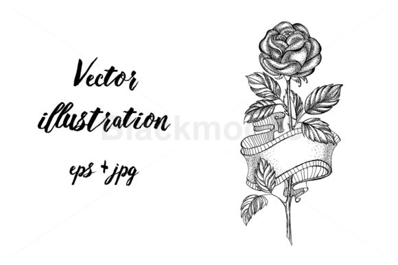 Rose Sketch with Ribbon Graphic Illustrations By Blackmoon9