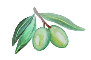 Green Olives in Watercolor Style Food & Drinks Craft Cut File By Creative Fabrica Crafts
