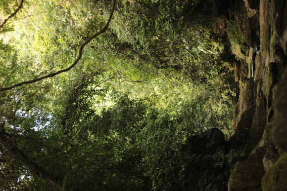 Print on Demand: Forest of Meghalaya - Photography Graphic Nature By underscore