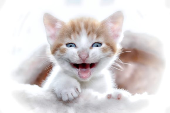 Print on Demand: Adorable Fluffy Kitten Graphic Animals By JLBIMAGES - Image 1