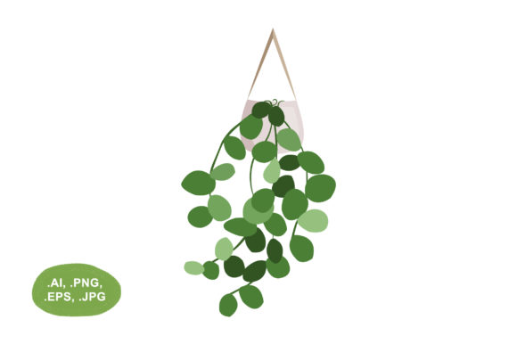 Botanical Hoya Obovata Hanging Vector Graphic Illustrations By Salfiart
