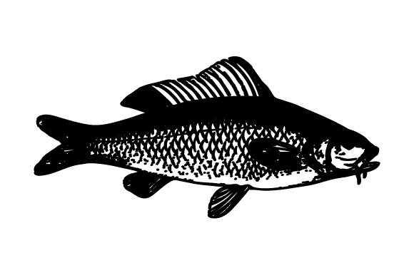 Download Free Shadow Fish Clip Art Graphic By Huntype Creative Fabrica for Cricut Explore, Silhouette and other cutting machines.
