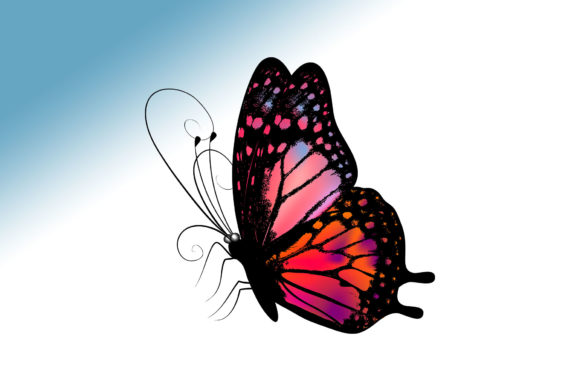 Butterfly 12a Graphic Illustrations By marku.stupic
