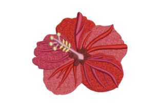 Hibiscus Single Flowers & Plants Embroidery Design By Embroidery Designs