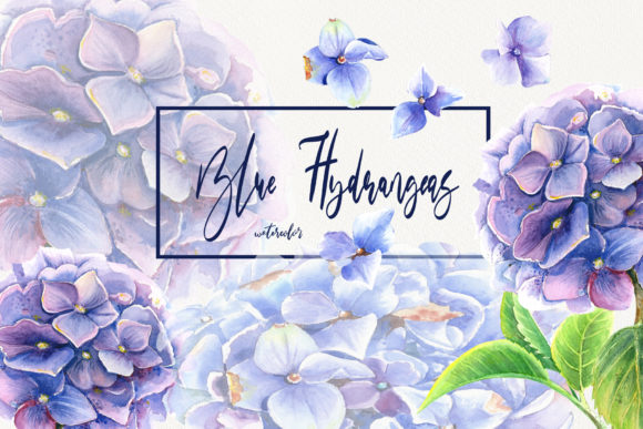 Watercolor Blue Hydrangeas Clip Art Graphic Illustrations By evgenia_art_art