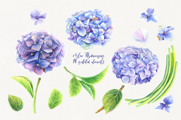 Watercolor Blue Hydrangeas Clip Art Graphic Illustrations By evgenia_art_art - Image 2