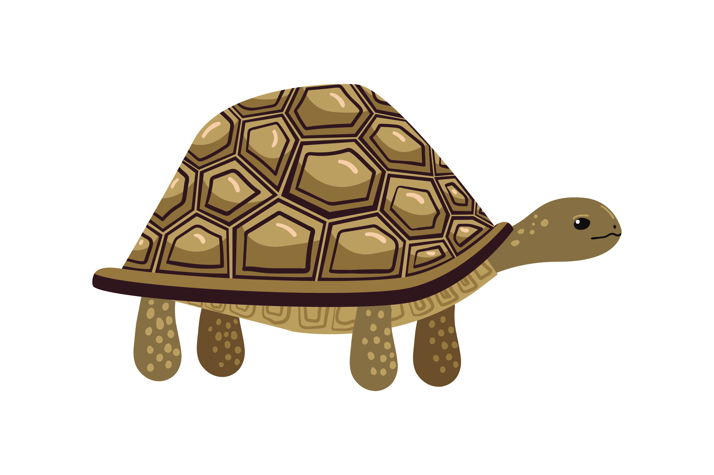 Download Free African Sulcata Tortoise Svg Cut File By Creative Fabrica Crafts SVG Cut Files