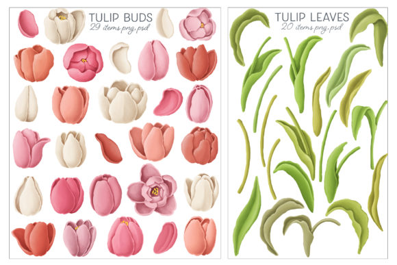 Print on Demand: Tulip Flowers Patterns Borders Graphic Illustrations By Architekt_AT - Image 6
