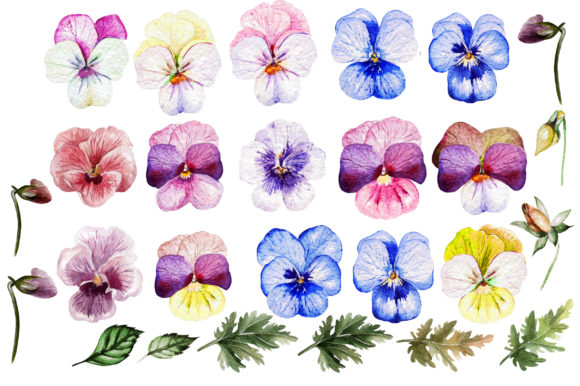 Watercolor Pansy Flowers Graphic Objects By Knopazyzy - Image 2