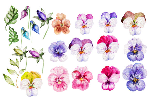 Watercolor Pansy Flowers Graphic Objects By Knopazyzy - Image 3