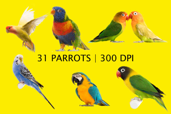 31 Parrots Clipart, Birds Overlays Graphic Layer Styles By impresstore