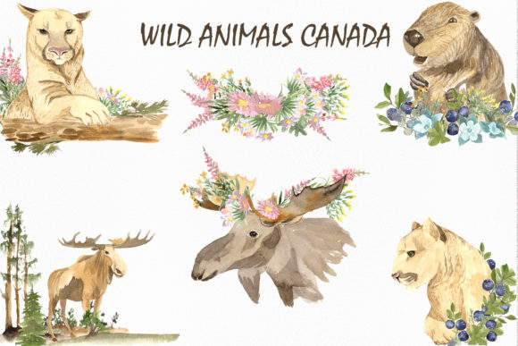Print on Demand: Wild Animals of Canada Graphic Illustrations By laffresco04