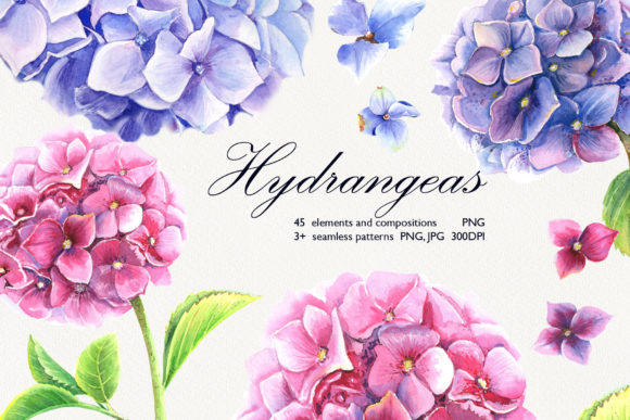 Print on Demand: Watercolor Hydrangeas Clip Art Set Graphic Illustrations By evgenia_art_art
