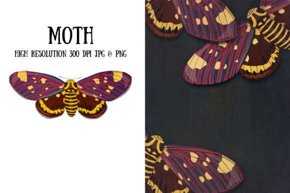 Moth Graphic Illustrations By My Little Black Heart