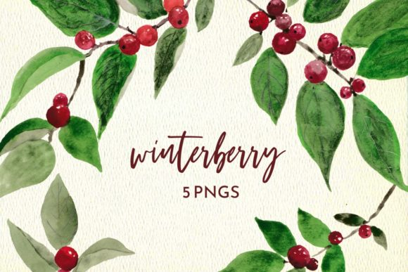 Print on Demand: Winter Berry Watercolor Graphic Illustrations By roselocket