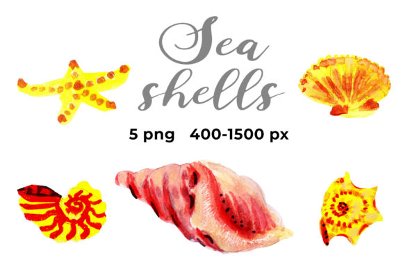 Seashells Graphic Objects By ramandu