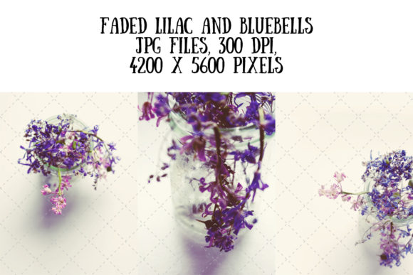 Faded Lilac and Bluebells Graphic Nature By My Little Black Heart