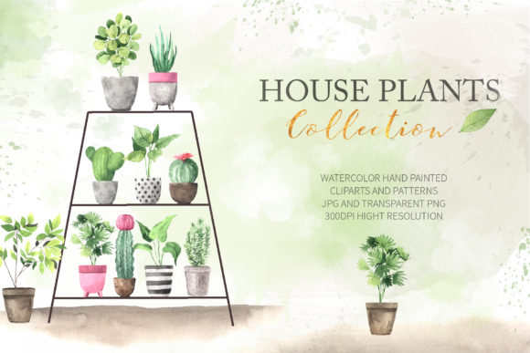 Watercolor House Plants Collection Graphic Illustrations By Larysa Zabrotskaya