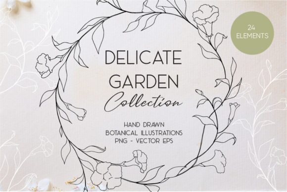 Delicate Botanic Garden Graphic Illustrations By  Drawbbit