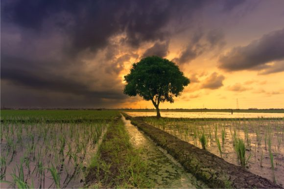 Print on Demand: Paddy Fields in the Afternoon Graphic Nature By Bintangcreative