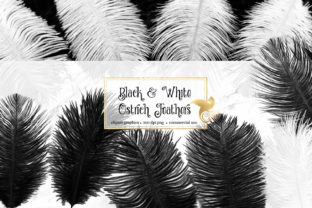 Print on Demand: Black and White Ostrich Feathers Graphic Objects By Digital Curio