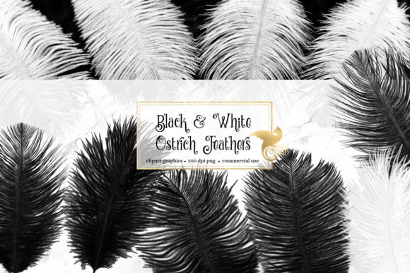 Black and White Ostrich Feathers Graphic Objects By Digital Curio