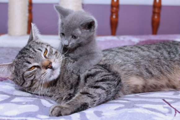 Print on Demand: Cute Mama Cat & Her Kitten Graphic Animals By JLBIMAGES
