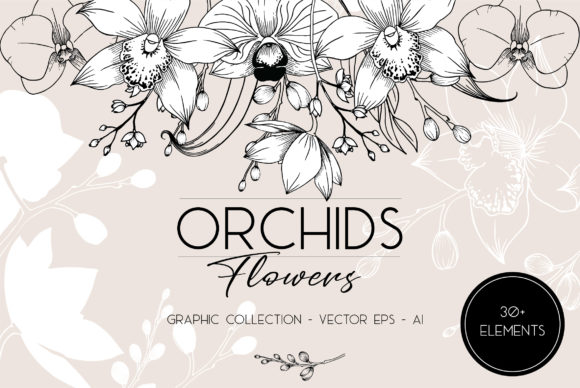 Orchids Flowers - Collection Graphic Illustrations By  Drawbbit