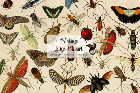 Vintage Bugs Clipart Graphic Illustrations By Digital Curio
