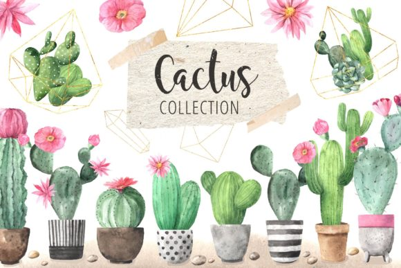 Watercolor Exotic Cactus Collection Graphic Illustrations By Larysa Zabrotskaya