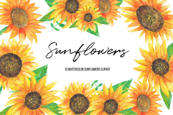 Watercolor Sunflowers Clipart Graphic Illustrations By BonaDesigns